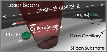 Identification of particles and/or cells in suspension using a mechano-optical system