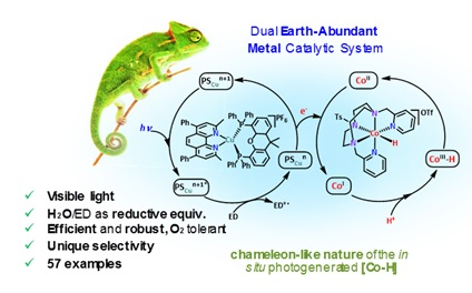 Photocatalytic system for the reduction of carbonyl and olefin groups