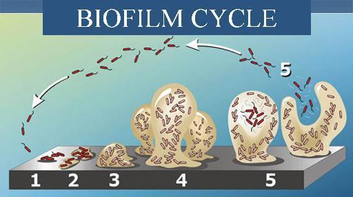 Novel Compounds for Disrupting Biofilms