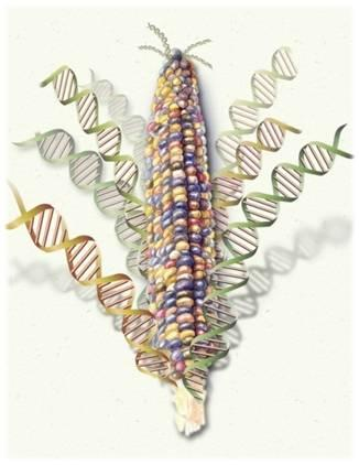 Research & Services | The Center for Genomic Technologies