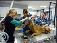 Novel Laryngoscope for Easier Intubation in Veterinary Applications